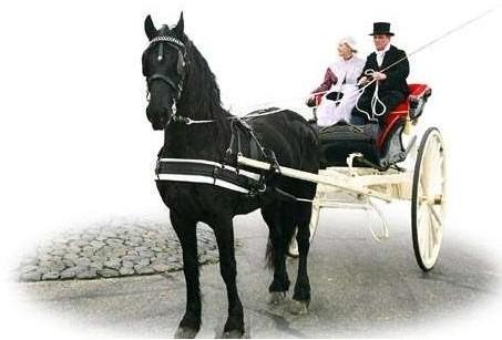 Ideal Equestrian Friese Tuigen